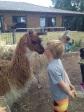 llama greeting