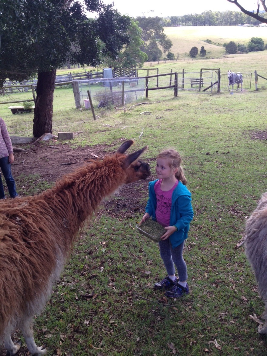 Making friends with a llama